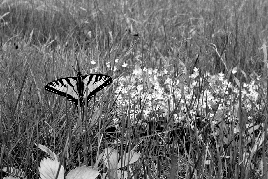 Lake St. Catherine State Park, VT ~ Butterfly ~ 2001 ~ CP013044 ~ Richard Clayton Photography ~ Cambridge Photo