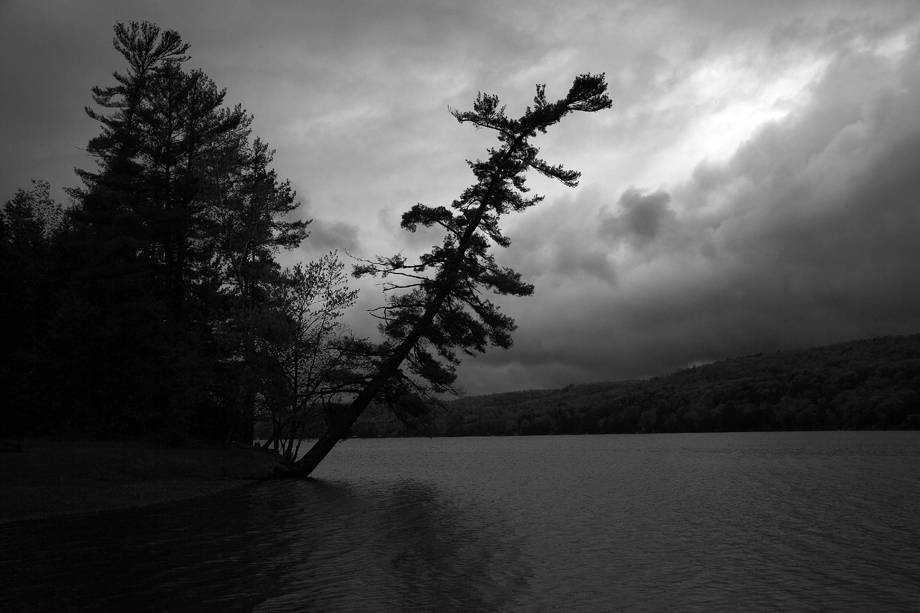 Lake St. Catherine VT ~ Tree in Storm ~ 2005 ~ CP053004 ~ Richard Clayton Photography ~ Cambridge Photo