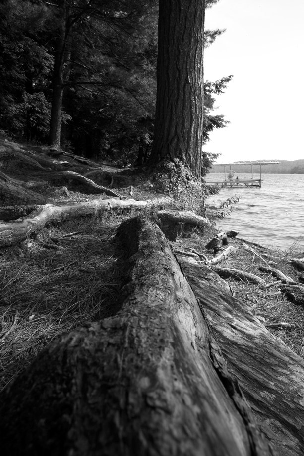 Lake St. Catherine VT ~ Roots ~ 2005 ~ CP053005 ~ Richard Clayton Photography ~ Cambridge Photo