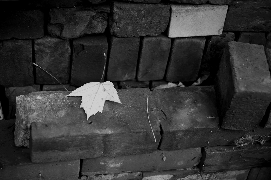 Granville NY ~ Leaf on Bricks ~ 2005 ~ CP053045 ~ Richard Clayton Photography ~ Cambridge Photo