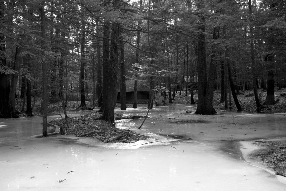 Lake St. Catherine State Park, VT ~ Winter Swamp 2 ~ 2006 ~ CP063005 ~ Richard Clayton Photography ~ Cambridge Photo