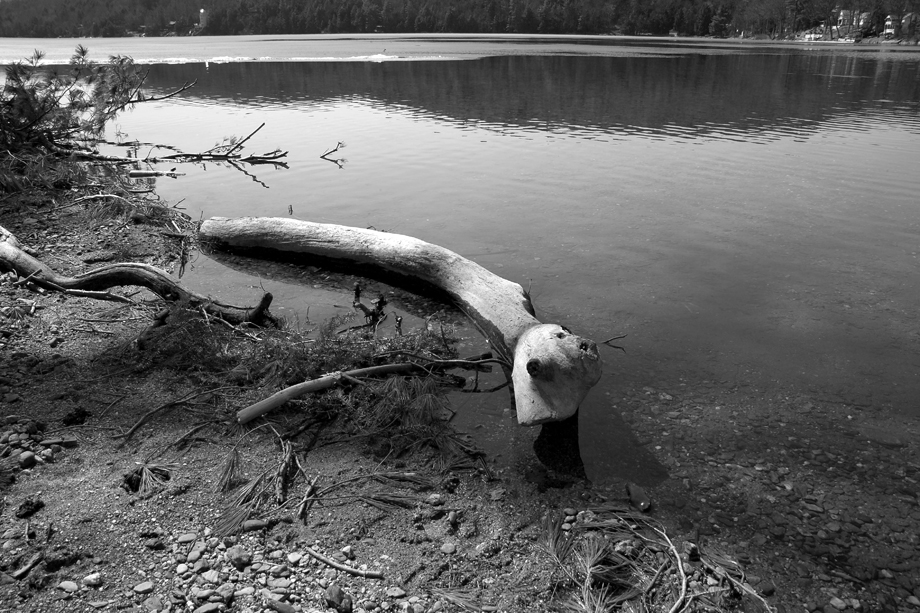 Lake St. Catherine State Park, VT ~ Lake Log ~ 2006 ~ CP063014 ~ Richard Clayton Photography ~ Cambridge Photo